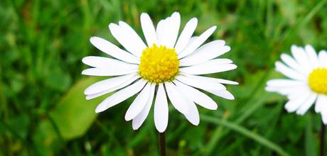daisy2_